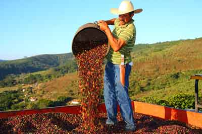 Brazilian Santos Farmer with red berries